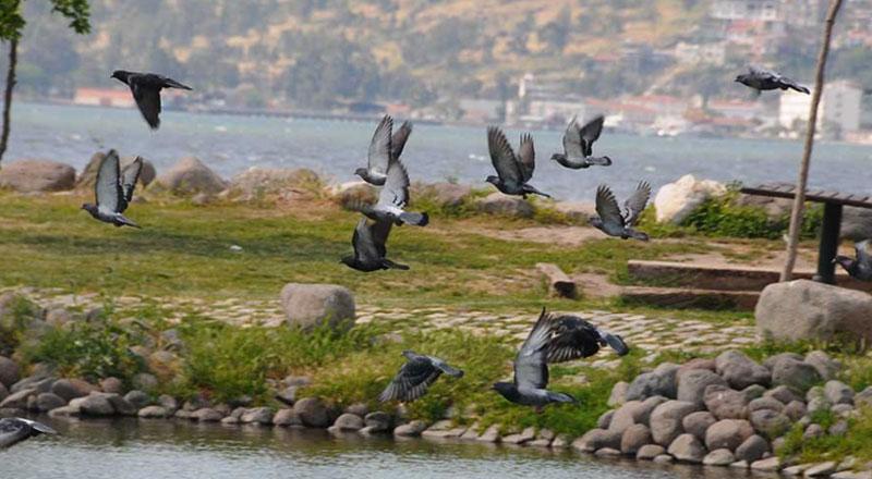 İzmir Meles Deltası