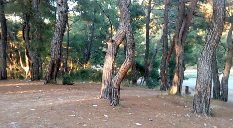 İzmir Park Orman Kemalpaşa Kammp alanı